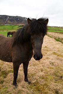 Horses... not ponies