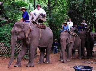 A smooth ride on the elephants
