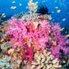 Rainbow Reef Fiji 2016
