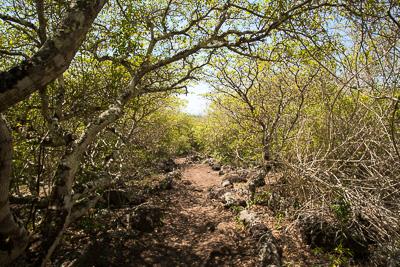 Volcanic trail San Cristobal