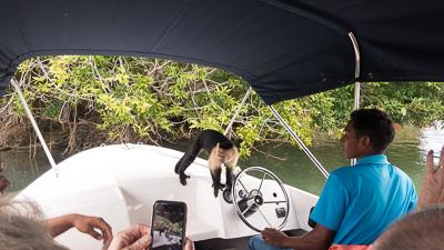 Monkey visits tourist boat in Gatun Lake