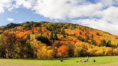 Fall color near Arrowtown